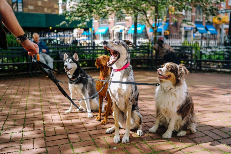 Be The Pack Leader Your Dog Wants (And Needs)